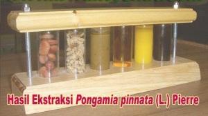 hasil-ekstrasi-untuk-bioenergi-hutan