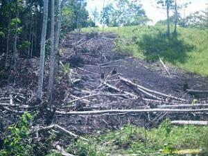 Kerusakan Ekosistem