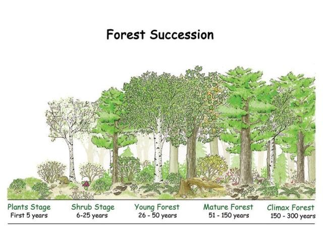 suksesi-hutan-2