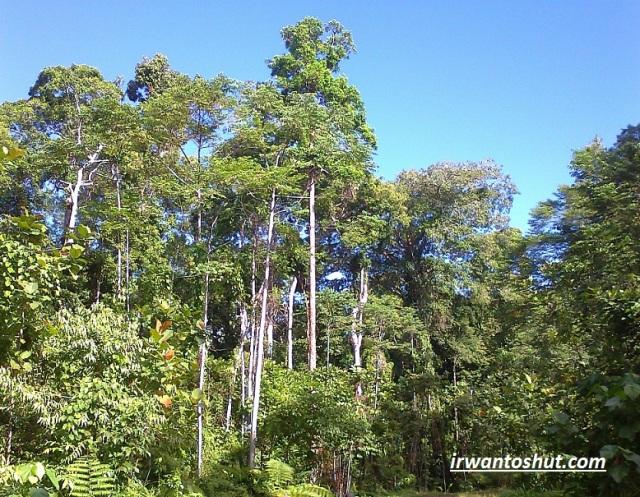 hutan-hujan-tropis